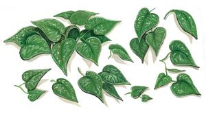 Leaves for Terracotta Planter